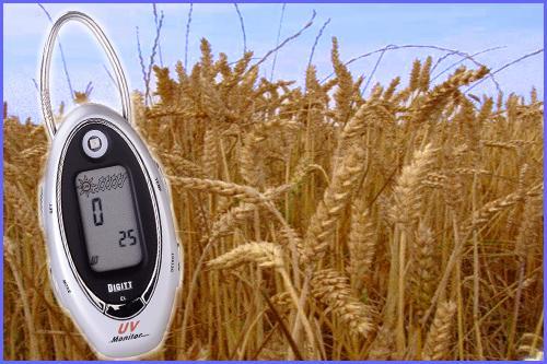 indicateur uv portable peaux sensibles soleil ble dore pain farine