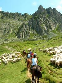 vtt cheval chevaux merens castillonnais sentier equestre bergerie haras cabane abris bombe cravache etrier selle longe tapis