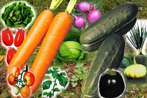 foret alimentation graine potager jardin familial