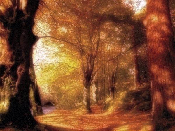 foret bois campagne wood promenade randonne plaisir nature
