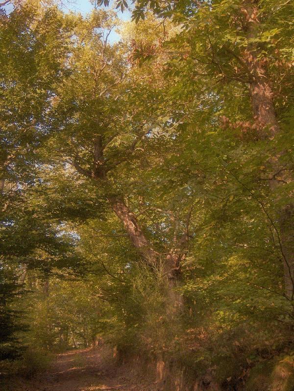 foret arbre alimentation jardin graine