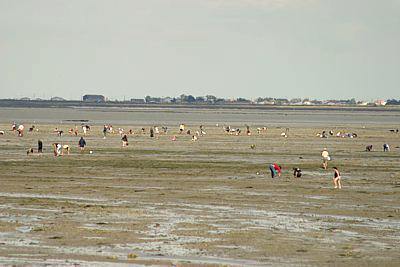 peche à pied coquillage bord de mer marée basse haute mer etale palourde coque moule crabe araignee poisson chateau sable