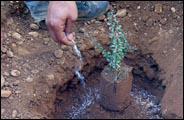 creuser terre melange cuilliere cuiller racine dose profond ground tree cycle developpement efficace surface capacite rentention compost terreau fumier onereux