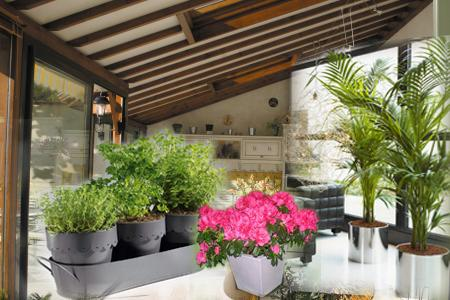veranda terrasse papyrus trompette ange jardin anglaise française pensee fleurs reve