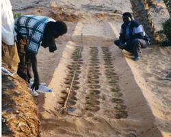 retenteur eau reserve reservoir protection environnement environment ecologie ecology preserver ressource naturelle afrique plantation alimentaire alimentation