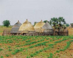 case maison afrique senegal soudan laitue legumes verts bio ecolo intensifier outil culture