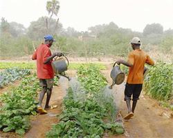 arrosage corvee chercher eau plante graine semence rendement travail terre