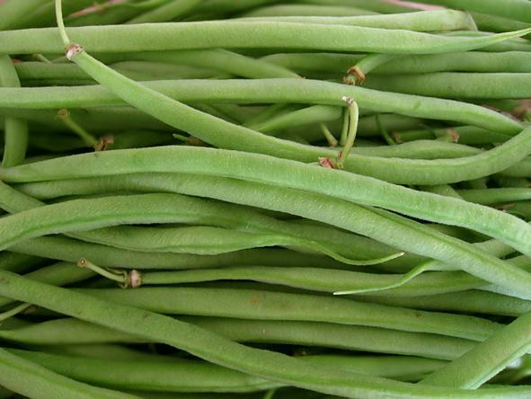 Tajine aux haricots verts et blog ambre marrakech delices paperblog - Variete de haricot vert ...