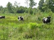 Roselière réserve naturelle marais VESLES-ET-CAUMONT