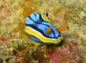L'image sous-marine Nouvelle-Calédonie