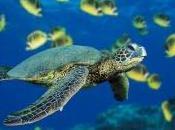 tortues vont aussi paradis...