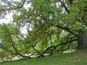 Jardin Thabor Rennes