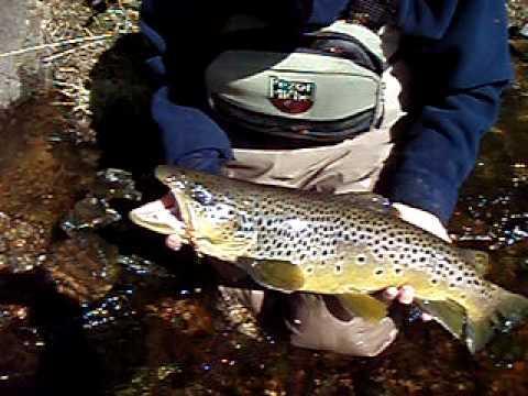 Pêche de la truite en Suède
