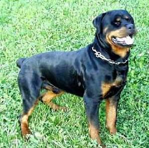 http://media.paperblog.fr/i/256/2568408/chiens-dangereux-loi-L-6.jpeg