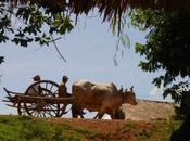 Quotidien khmer