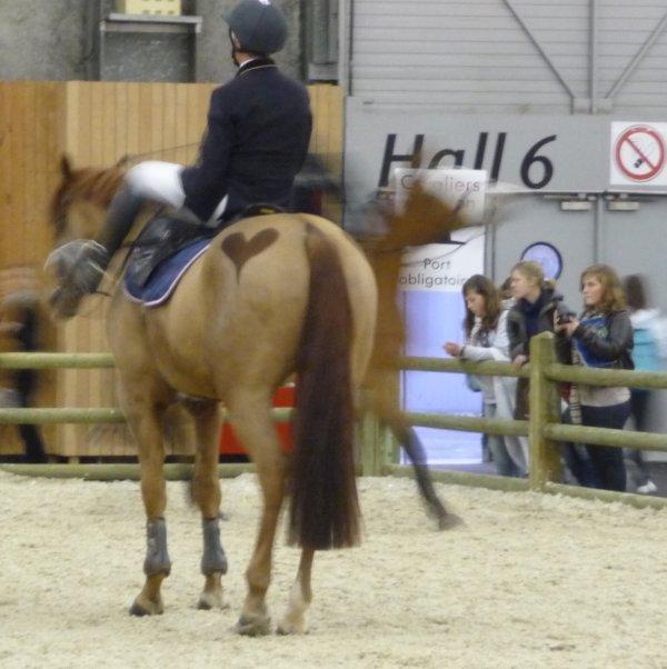 acad mie de voltige equestre au salon du cheval 2009