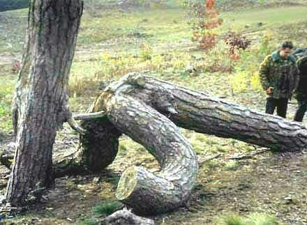 Magie de la nature3 dans Nature insolite