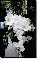 connaissez-vous le langage des fleurs? | À découvrir