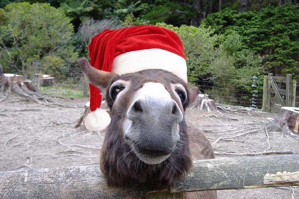 les animaux deguises en pere noel 000 Les animaux déguisés en Père Noël (100 photos)