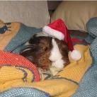 thumbs les animaux deguises en pere noel 007 Les animaux déguisés en Père Noël (100 photos)