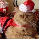 thumbs les animaux deguises en pere noel 014 Les animaux déguisés en Père Noël (100 photos)