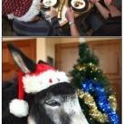 thumbs les animaux deguises en pere noel 027 Les animaux déguisés en Père Noël (100 photos)