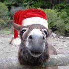 thumbs les animaux deguises en pere noel 000 Les animaux déguisés en Père Noël (100 photos)