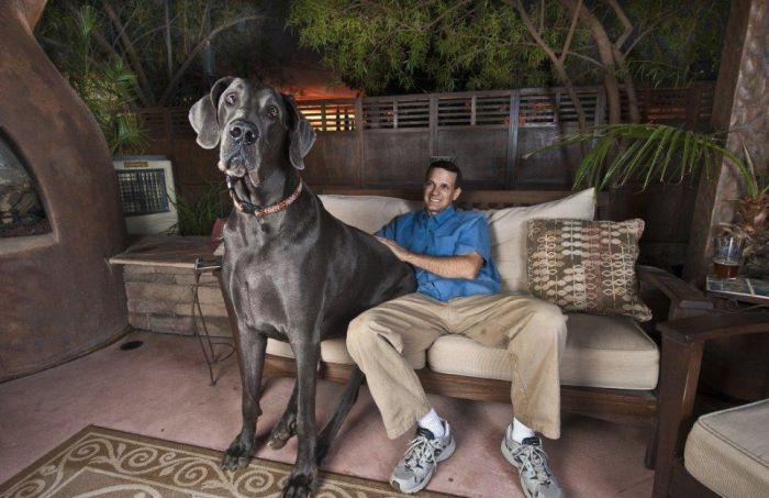chien geant 000 Un Chien Géant ! (6 photos)