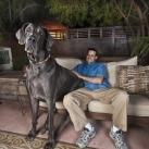 thumbs chien geant 000 Un Chien Géant ! (6 photos)
