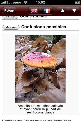 Champignons c est encore la saison paperblog - Application pour reconnaitre les champignons ...