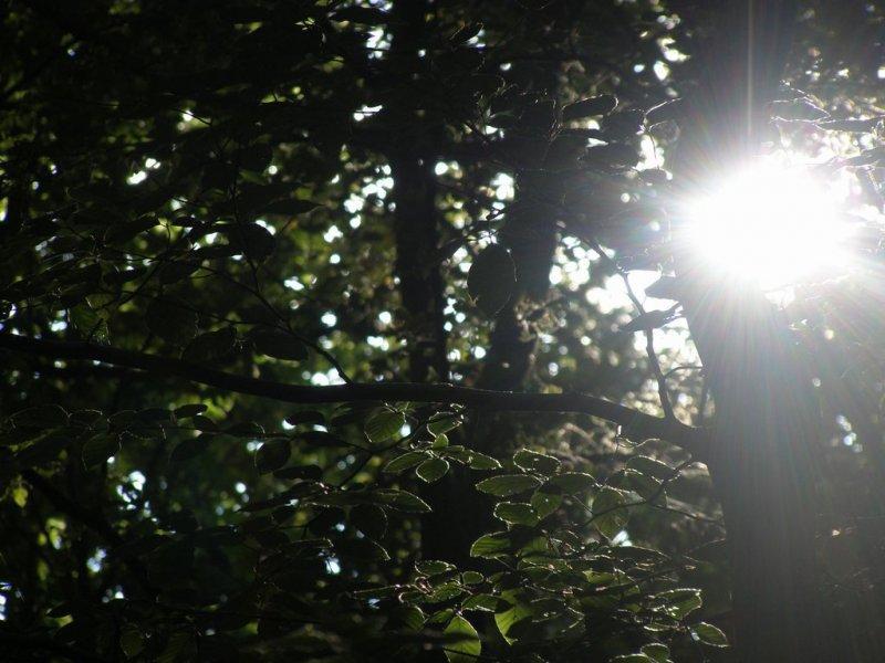 La nuit n'est pas ce que l'on croit (Philippe Jaccottet)