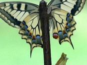 2010 Année Internationale biodiversité