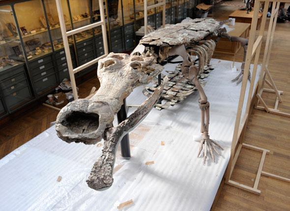 sarcosuchus-imperator.1263476937.jpg