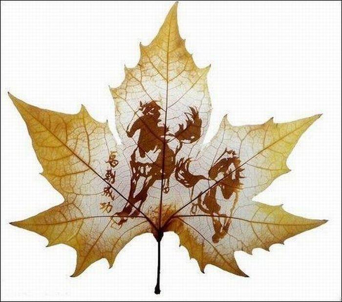 dessins-feuilles-arbres-12