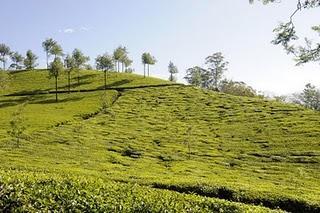 Retour d'Inde : de Kovalam à Calicut