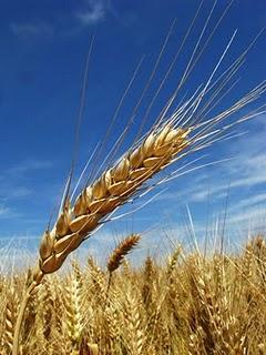 Le grain et l'économie