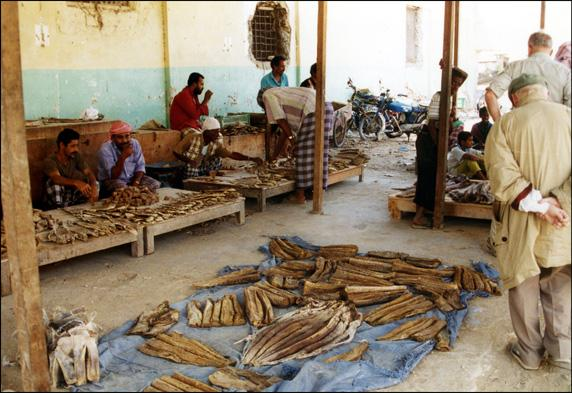 yemen-as-shihr-marche-poissons.1263302825.jpg