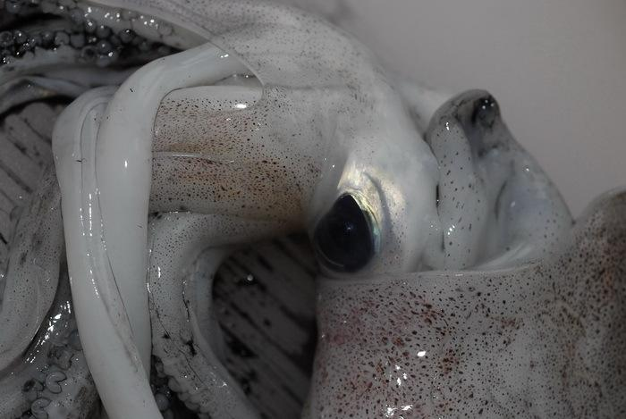 poulpe.jpg