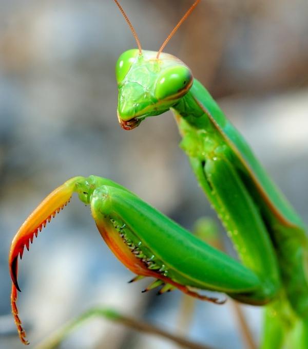 Cigale, fourmi ou bousier?