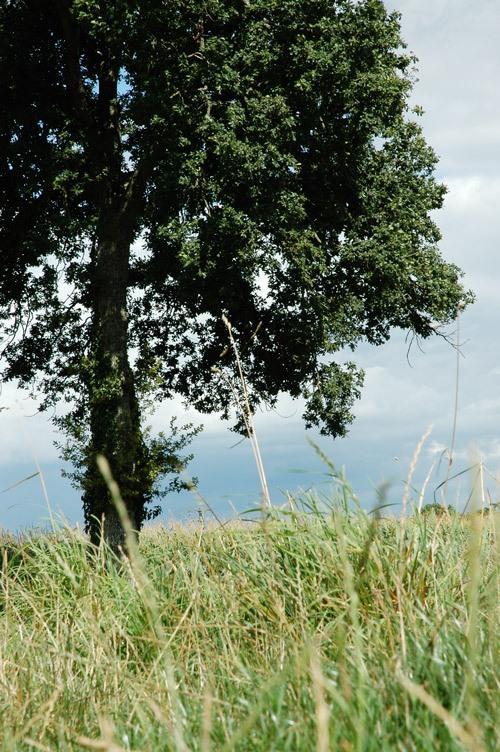 L'herbe aura poussé (Christine Lièvre)