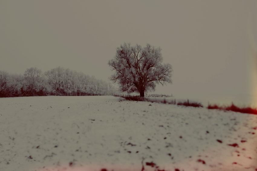 neige-387.jpg