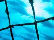 Sondage Greenpeace écrasante majorité Français demande protection thon rouge