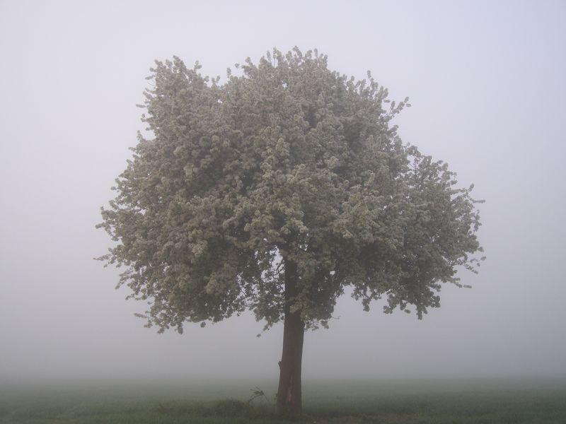 Le brouillard (Maurice Carême)
