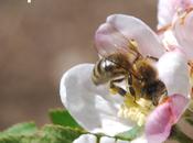 réserves pollen long routes nationales