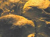 brioche Julia Child
