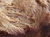 Pain brioché Nutella brioche