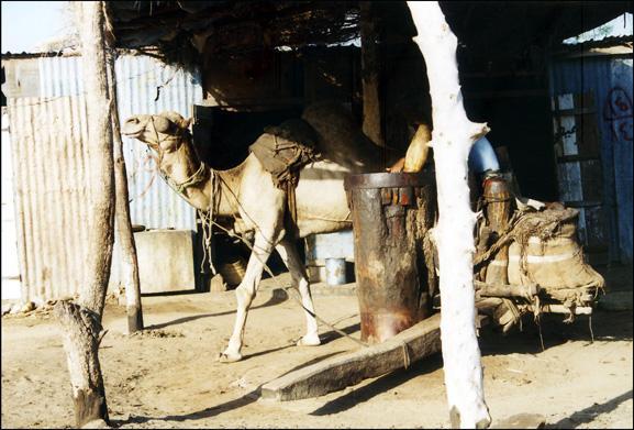yemen-bayt-al-faquim.1263303797.jpg