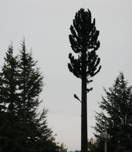 Photos d'antennes relais GSM déguisés
