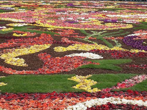 tapis de fleurs 2008 par fabonthemoon