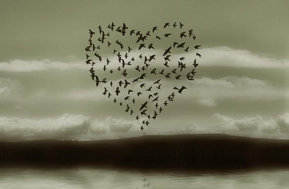 Dans le coeur des hommes (Abdellatif Laâbi)